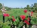 порт эль кантауи цветы на поле для гольфа.jpg
