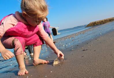 Сезон медуз в Тунисе