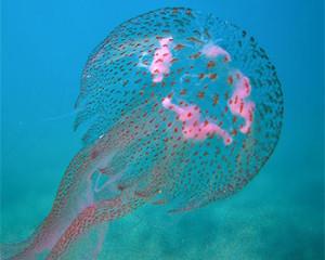 монастир в августе медузы отзывы